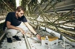 Pflanzenschutz-Hummelbox-GemuesebauSteiner-012-980x653
